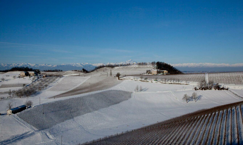 Pecchenino wijngaarden in de sneeuw 2