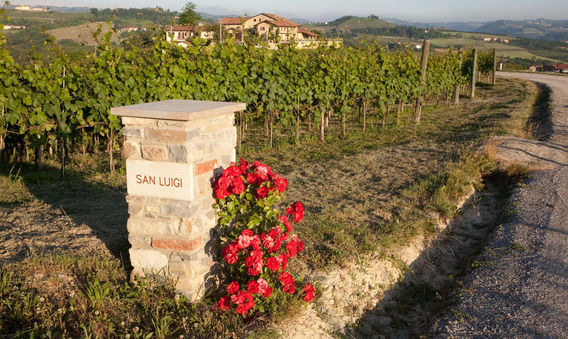 Wijngaard Pecchenino San Luigi