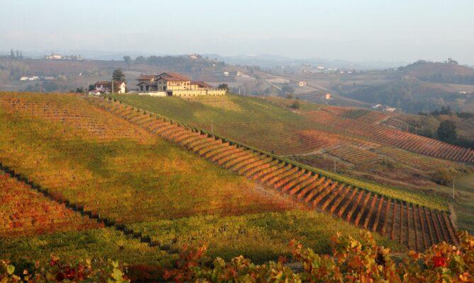 Wijngaard Pecchenino in de herfst 2