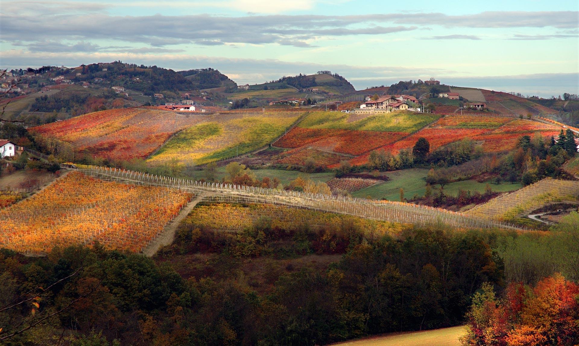 Wijngaard Pecchenino in de herfst