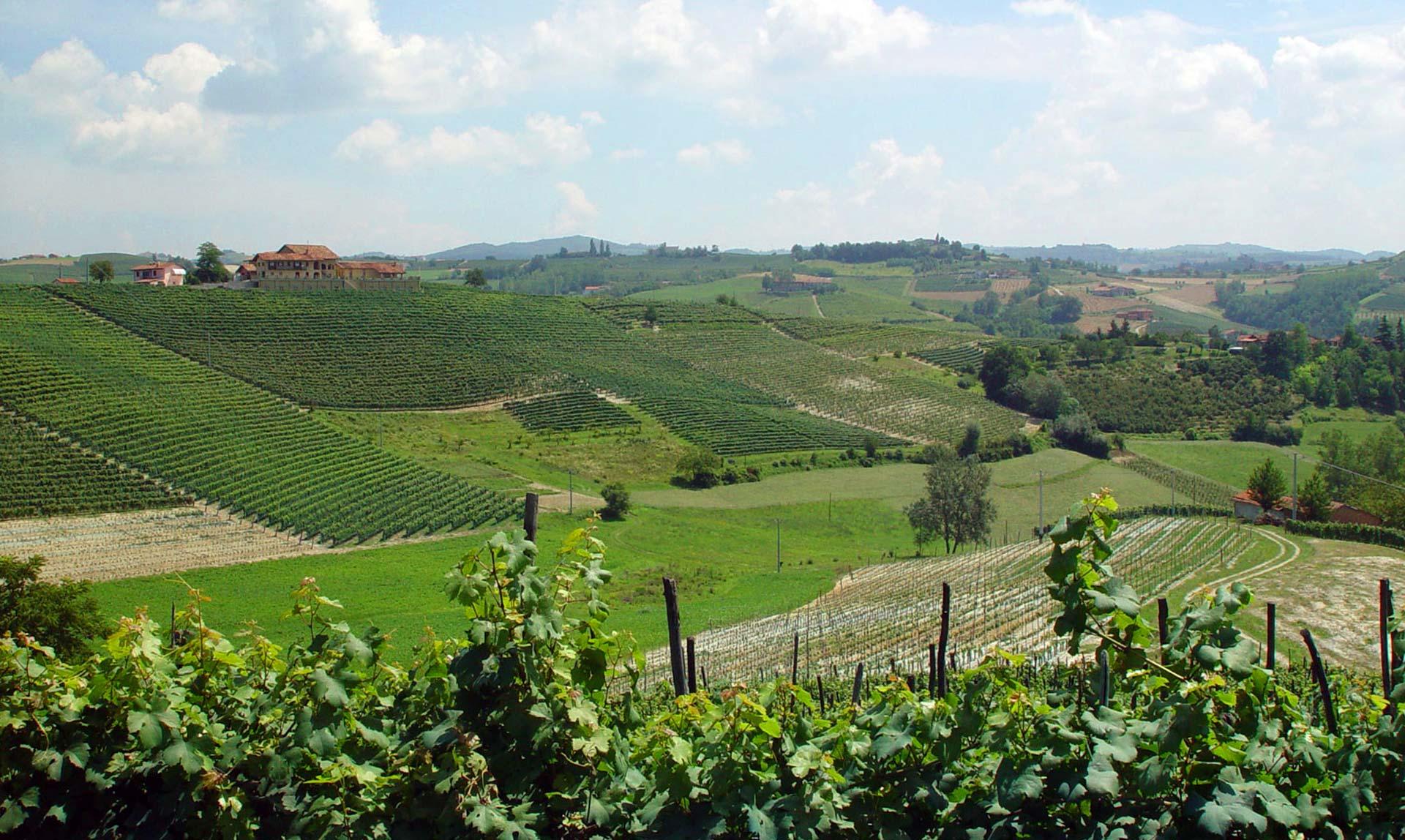 Wijngaarden Pecchenino lente