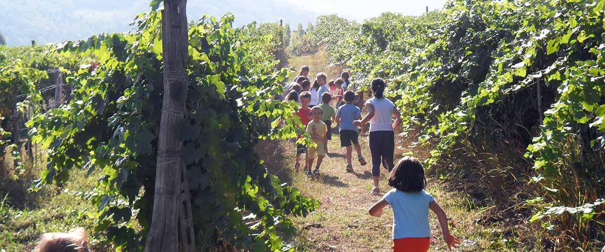 biodynamische wijngaard