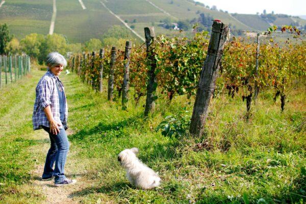 Carussin wijndomein 2
