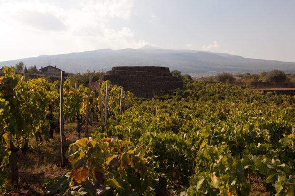 I Custodi Centenaria-con-torretta-e-Etna