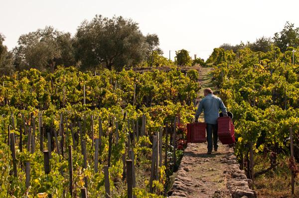 I Custodi Centenaria-con-vignere