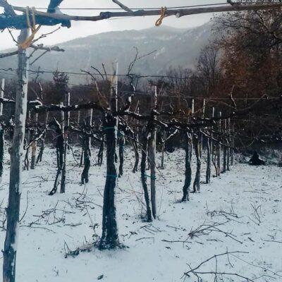 Ciro Picariello sneeuw