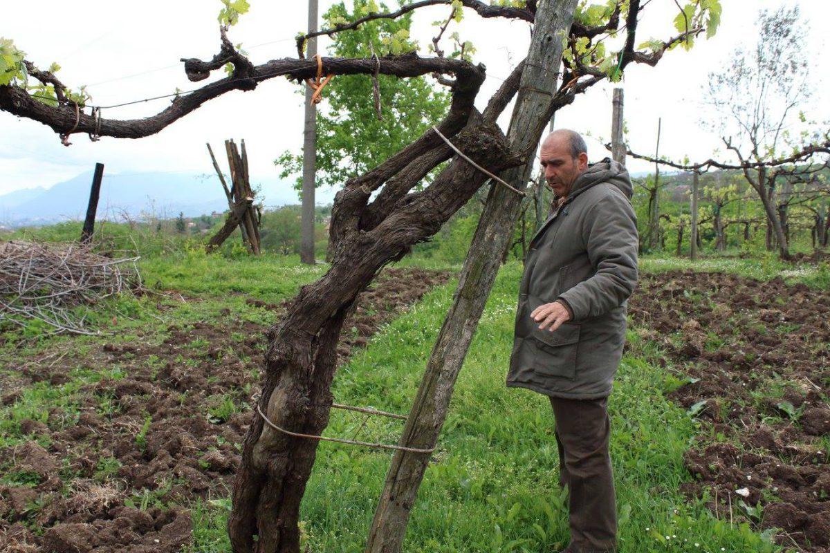 Ciro Picariello wijndomein