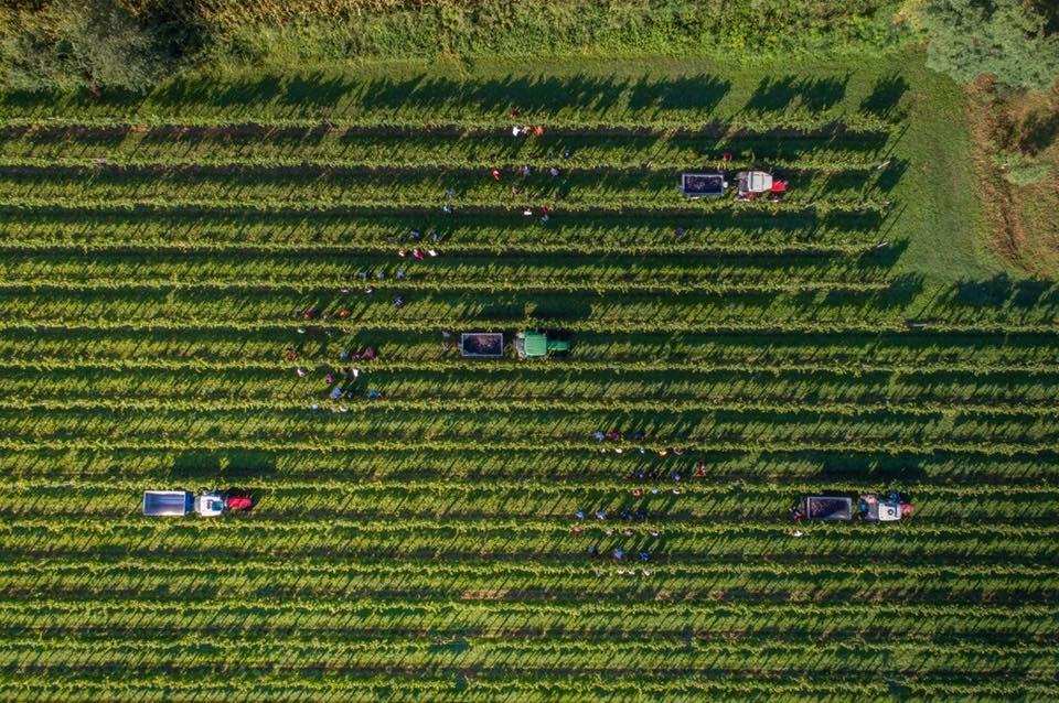 Di Lenardo oogst 2