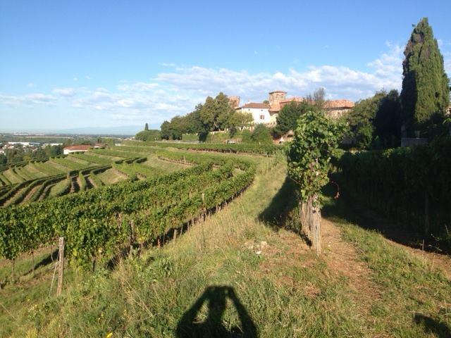 Di Lenardo wijngaard 3