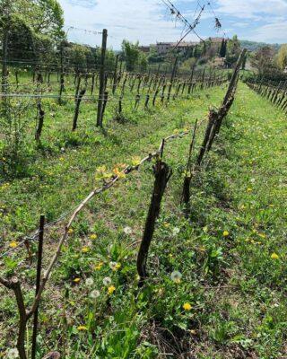 Divella wijndomein 4