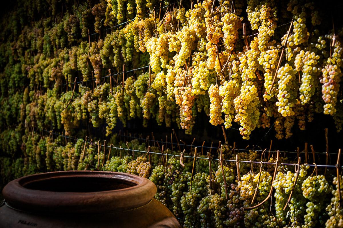 Drogen van wijndruiven