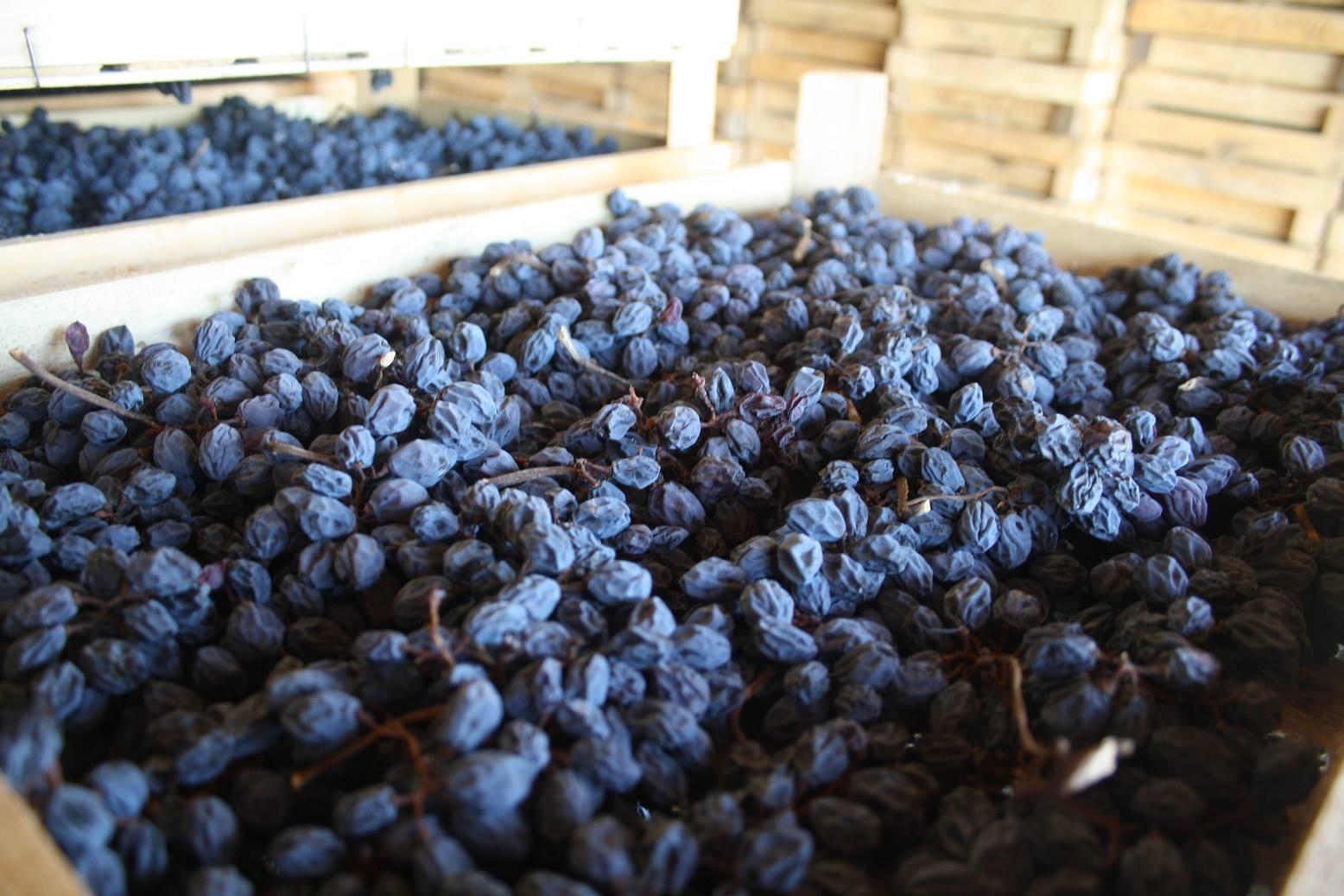 Druiven Amarone Monte dall'Ora