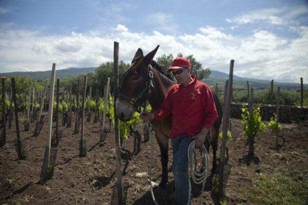 I Custodi delle vigne dell'Etna wijndomein