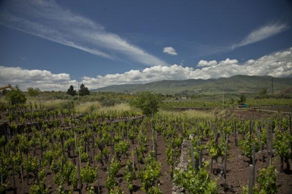 I Custodi wijngaard
