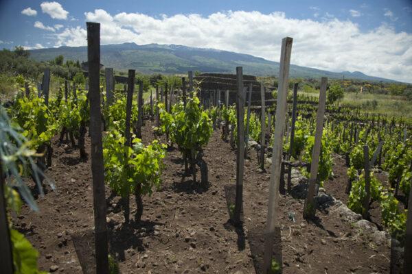I Custodi wijngaard 2