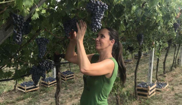 Monte dall'Ora wijndomein
