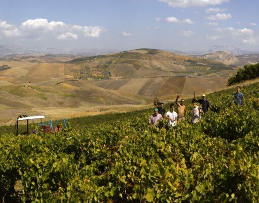 Valdibella wijndomein